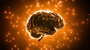 imiage of a brain